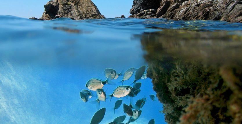 Scuba Tours Dive Centre Sunset Beach Club, Benalmadena, Malaga